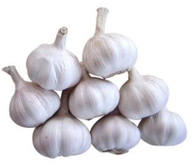 Garlic (लहसुन)